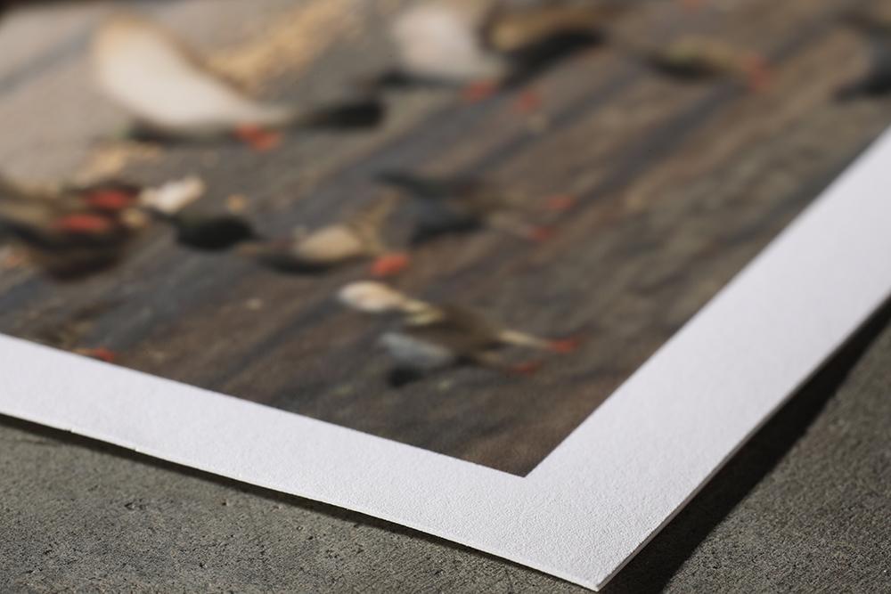 Epson hot press smooth fine art photo paper